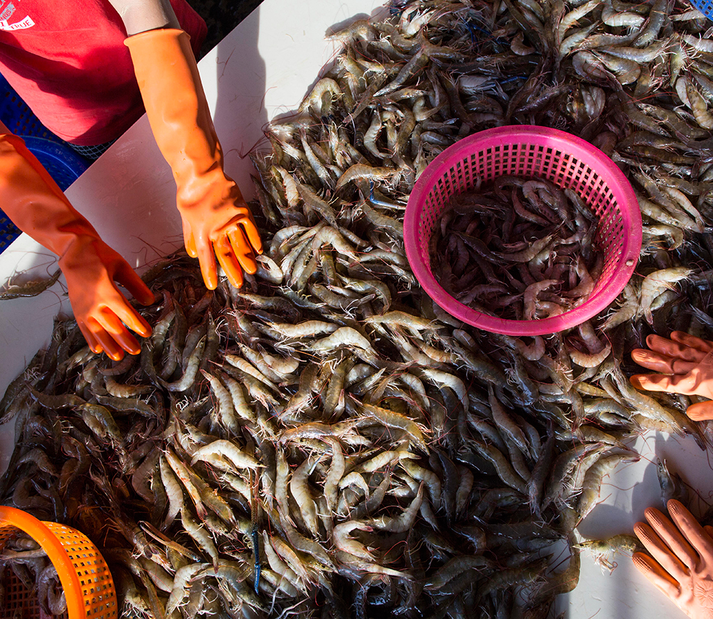 Nestle confirms labor abuse among its Thai seafood suppliers